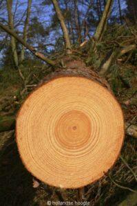 Oude maar gezonde bomen gaan om