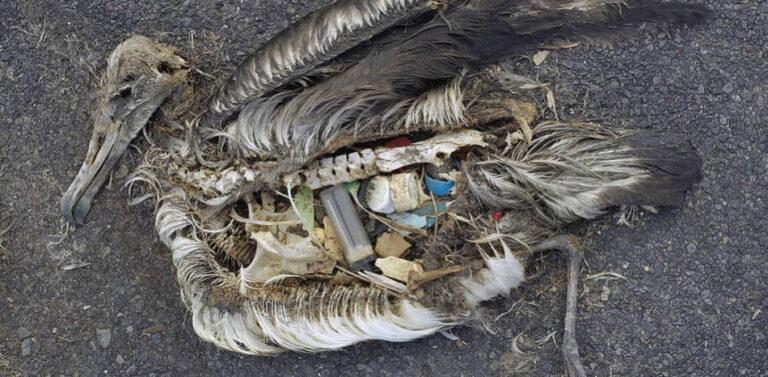 Plastic in dode vogel