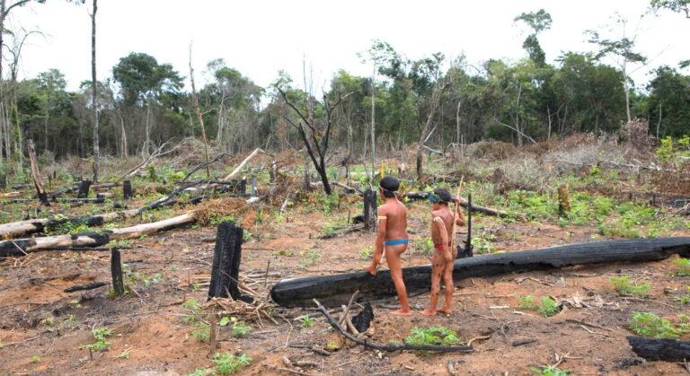 Amazone: regenwoud gekapt voor giftige handel